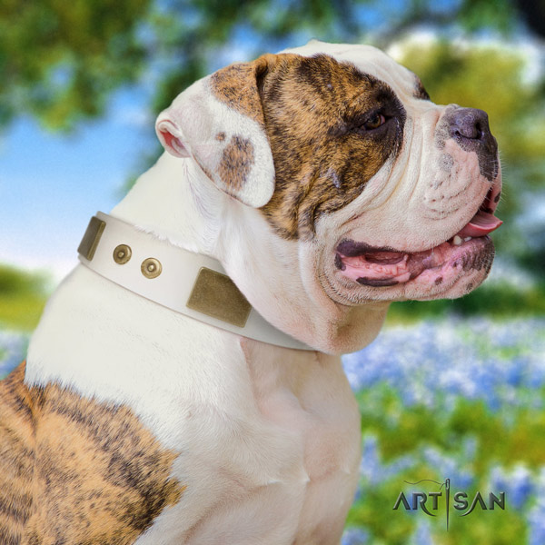 American Bulldog impressive full grain leather dog collar with embellishments for daily use