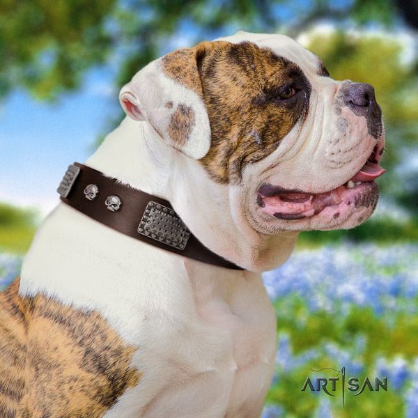 American Bulldog incredible genuine leather dog collar with studs for stylish walking