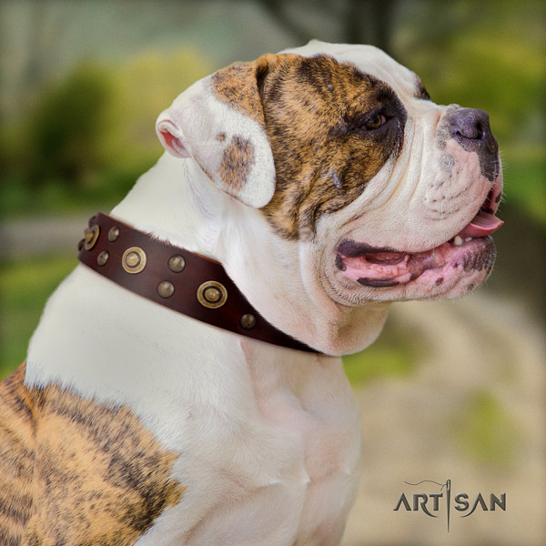 American Bulldog unusual full grain leather dog collar with adornments for basic training