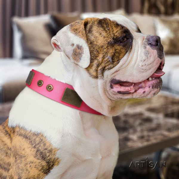 American Bulldog stylish design full grain leather dog collar with adornments for comfy wearing