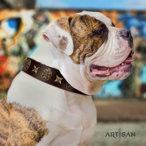 American Bulldog fashionable full grain genuine leather dog collar for stylish walking