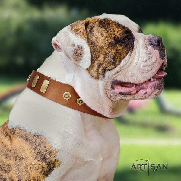 American Bulldog exquisite genuine leather dog collar for walking