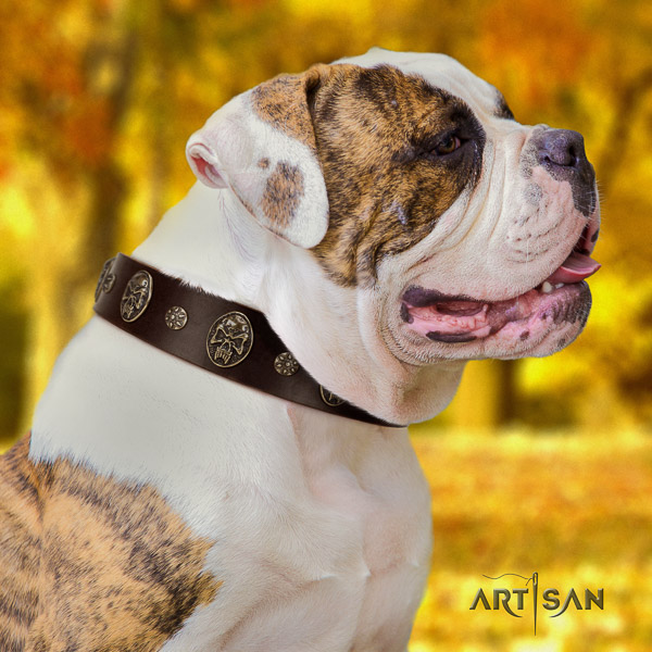 American Bulldog everyday walking natural leather collar with unusual decorations for your pet