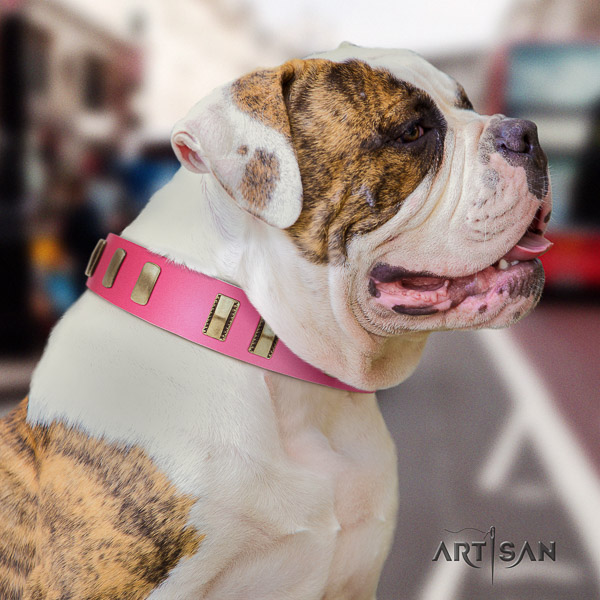 American Bulldog easy to adjust genuine leather dog collar for daily walking