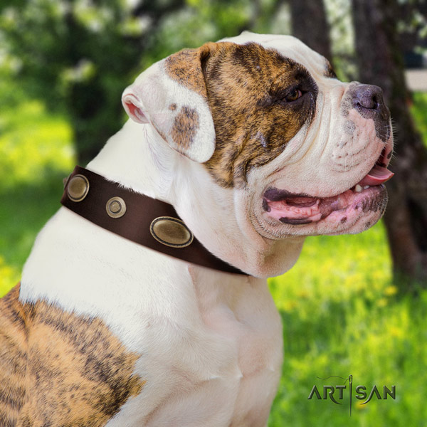 American Bulldog exquisite leather dog collar with decorations for daily walking
