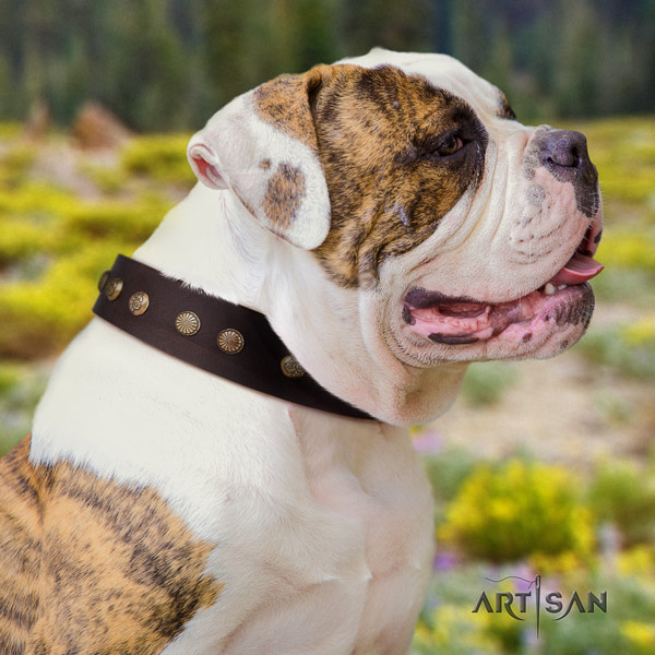 American Bulldog stylish leather dog collar with decorations for easy wearing