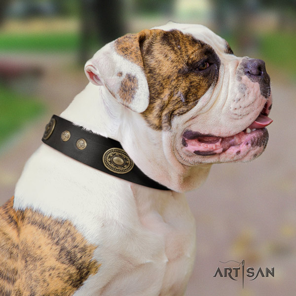 American Bulldog impressive genuine leather dog collar with studs for fancy walking