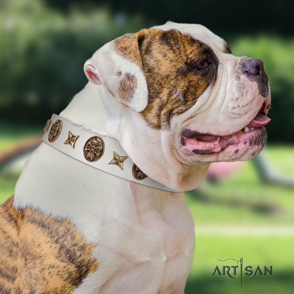 American Bulldog handcrafted full grain genuine leather dog collar for daily walking