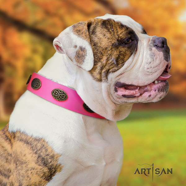 American Bulldog impressive full grain leather dog collar with embellishments for comfortable wearing