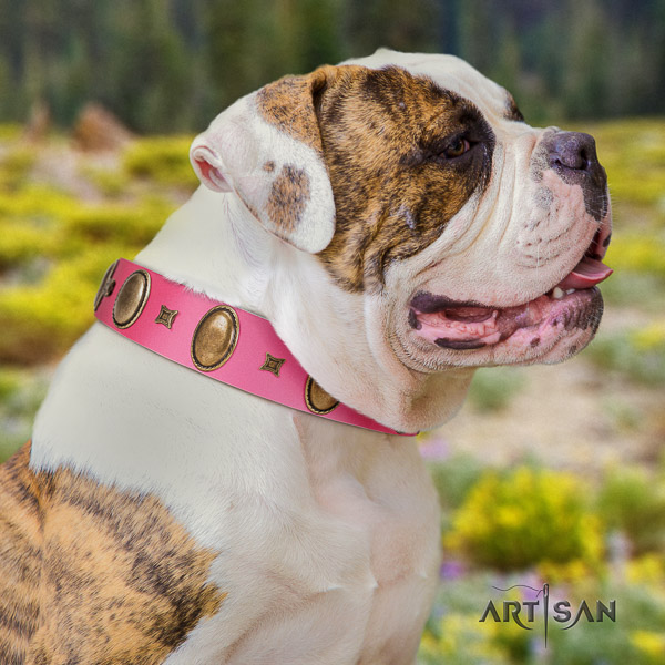 American Bulldog remarkable genuine leather dog collar for daily walking
