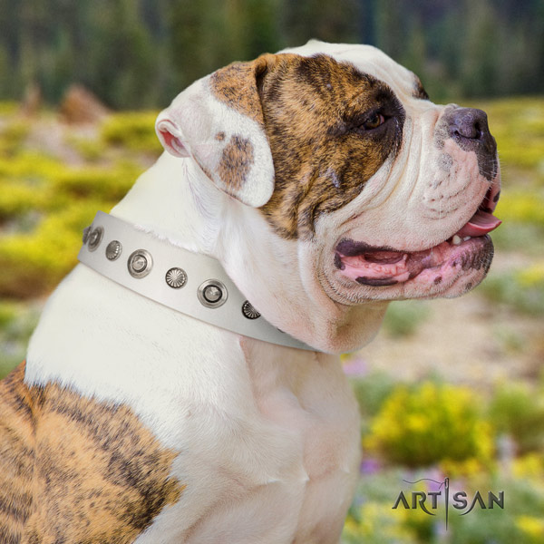American Bulldog designer leather dog collar with embellishments for easy wearing