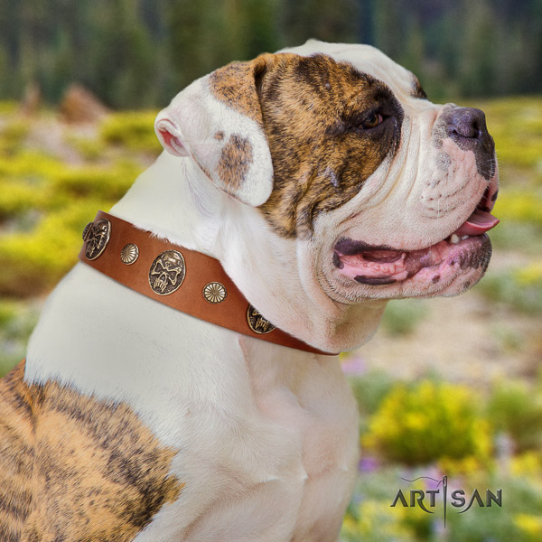 American Bulldog fancy walking genuine leather collar with stylish adornments for your doggie