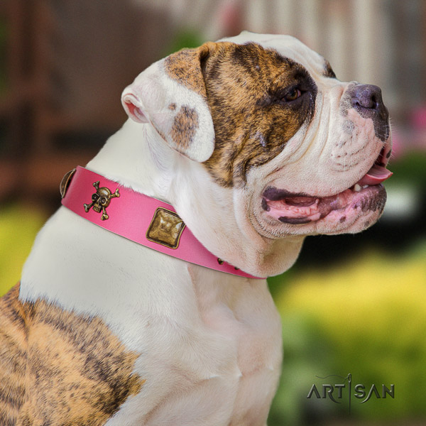 American Bulldog trendy full grain leather dog collar for daily walking