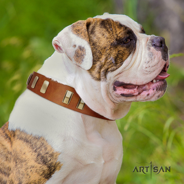 American Bulldog incredible full grain genuine leather dog collar for comfy wearing