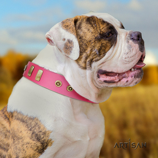 American Bulldog incredible full grain genuine leather dog collar for daily walking