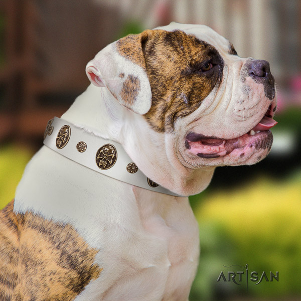 American Bulldog handy use full grain leather collar with inimitable studs for your doggie