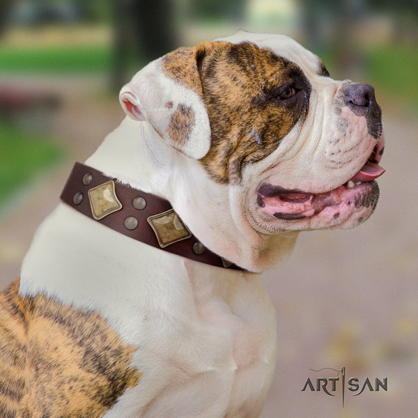 American Bulldog unusual leather dog collar with embellishments for easy wearing
