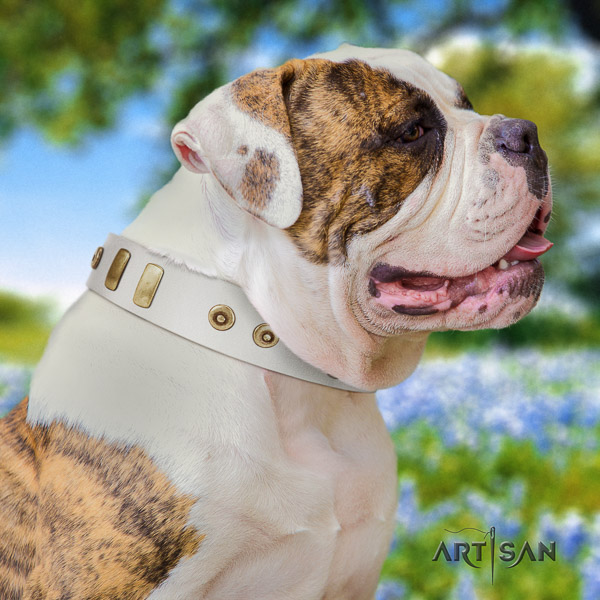 American Bulldog handmade leather dog collar for basic training