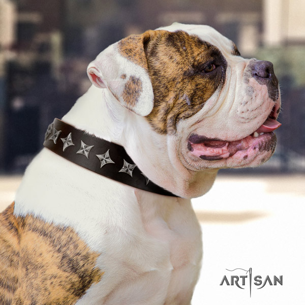 American Bulldog top notch genuine leather dog collar with decorations for comfortable wearing