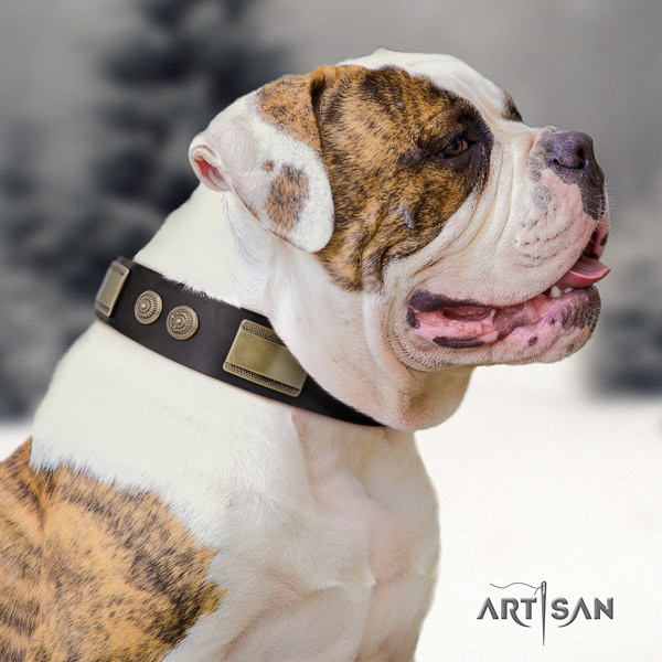 American Bulldog significant leather dog collar with decorations for basic training