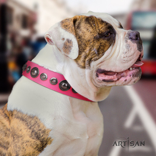 American Bulldog awesome leather dog collar with studs for walking