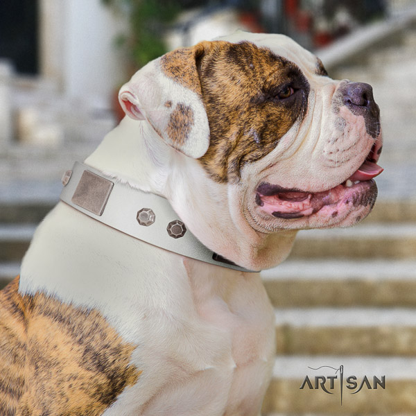 American Bulldog incredible natural genuine leather dog collar for handy use