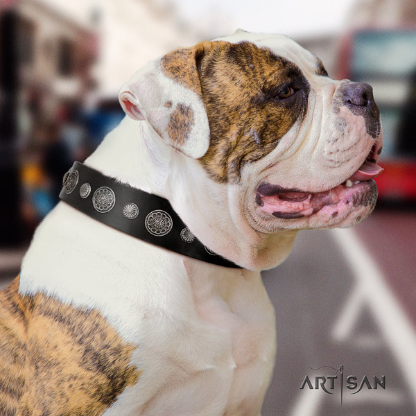 American Bulldog fashionable leather dog collar with studs for fancy walking