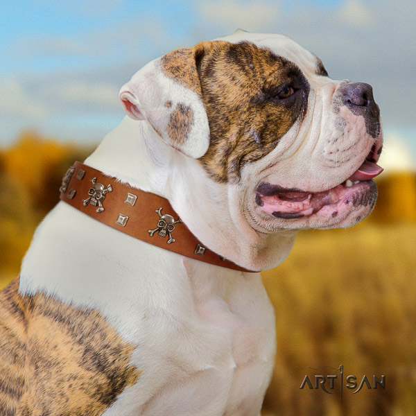 American Bulldog top quality natural genuine leather dog collar for daily use