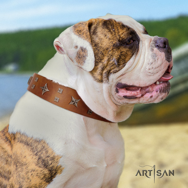 American Bulldog fashionable natural genuine leather dog collar for stylish walking