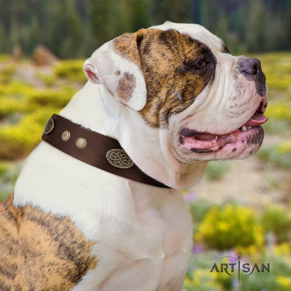 American Bulldog inimitable full grain leather dog collar with embellishments for fancy walking