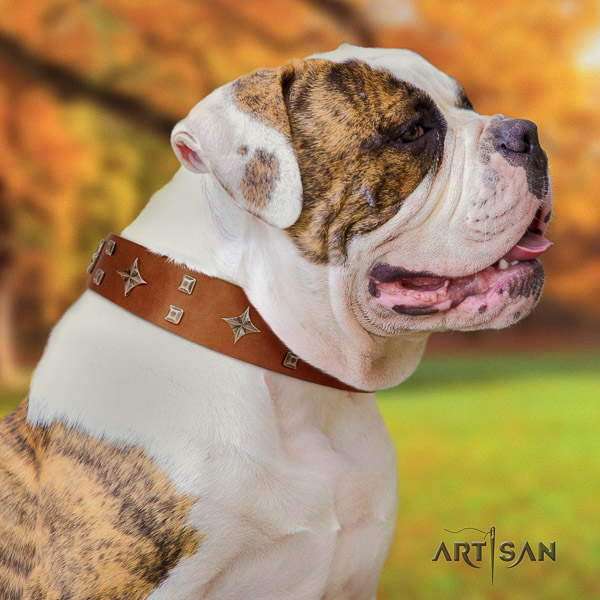American Bulldog stunning full grain natural leather dog collar for everyday use