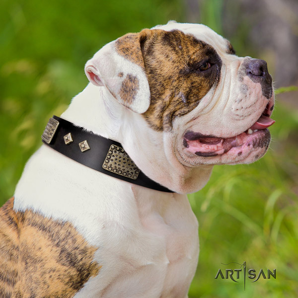 American Bulldog amazing leather dog collar with studs for walking