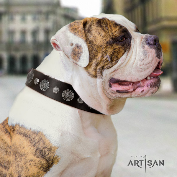 American Bulldog unique full grain leather dog collar with embellishments for stylish walking
