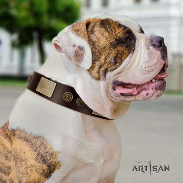 American Bulldog stylish walking natural leather collar with remarkable adornments for your dog