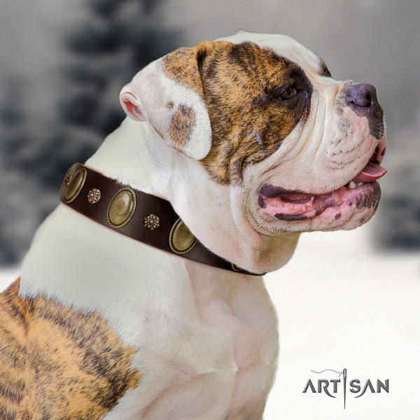 American Bulldog unique full grain natural leather dog collar for handy use