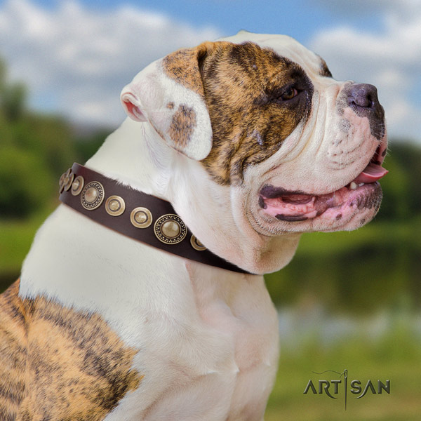 American Bulldog exceptional leather dog collar with studs for comfortable wearing