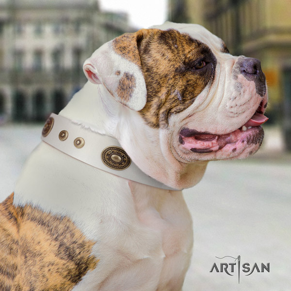 American Bulldog trendy full grain leather dog collar with decorations for easy wearing