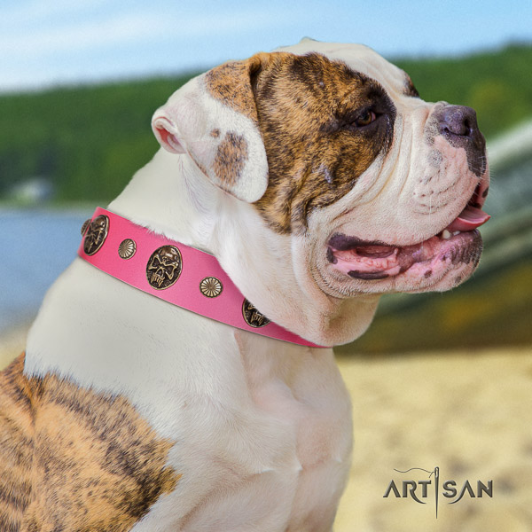 American Bulldog walking natural leather collar with unique decorations for your pet