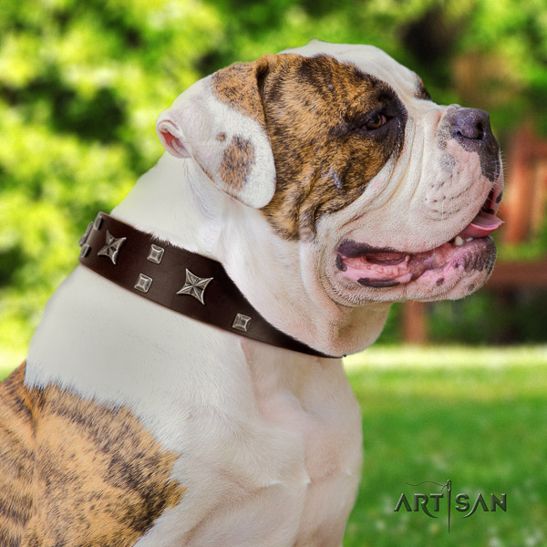 American Bulldog unique full grain genuine leather dog collar for stylish walking