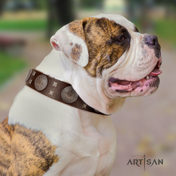 American Bulldog exquisite full grain leather dog collar for comfy wearing