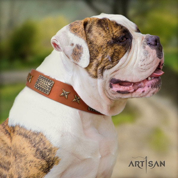 American Bulldog top notch genuine leather dog collar with adornments for comfy wearing