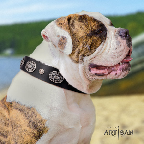 American Bulldog remarkable leather dog collar with embellishments for everyday use