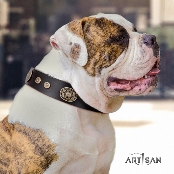 American Bulldog exceptional full grain leather dog collar with decorations for stylish walking