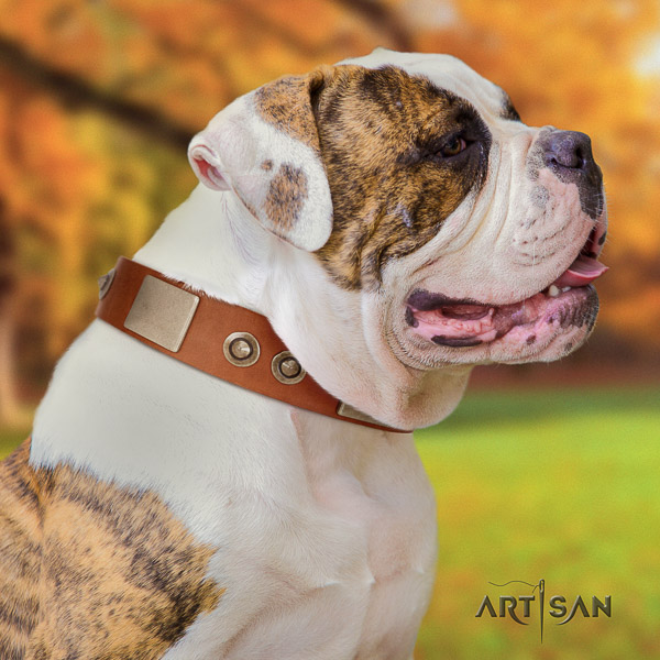 American Bulldog stylish walking leather collar with stylish design adornments for your canine