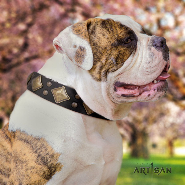 American Bulldog exceptional genuine leather dog collar with decorations for handy use