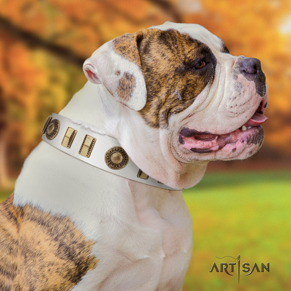 American Bulldog adorned full grain leather dog collar for daily walking