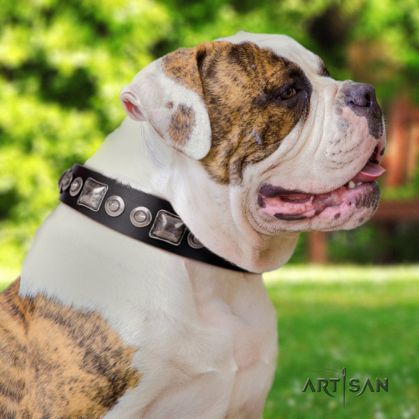 American Bulldog incredible full grain leather dog collar with embellishments for easy wearing