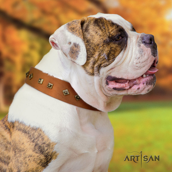 American Bulldog unique leather dog collar with adornments for basic training