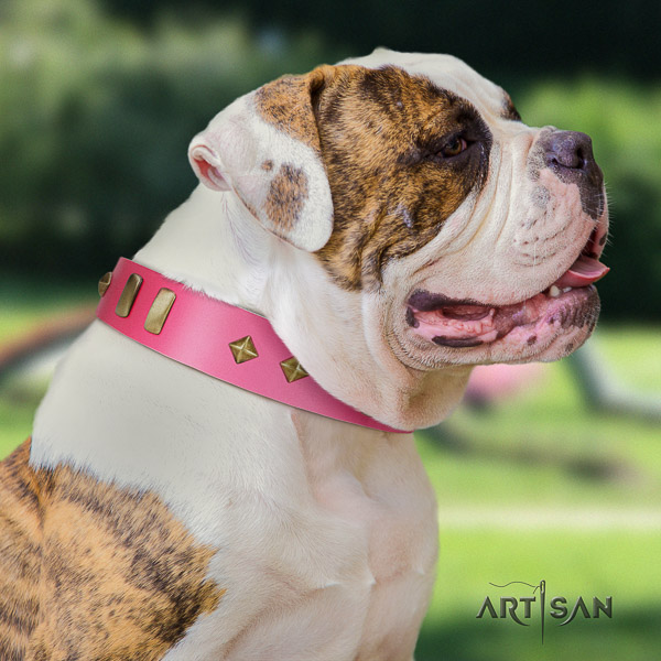 American Bulldog extraordinary full grain natural leather dog collar for daily walking