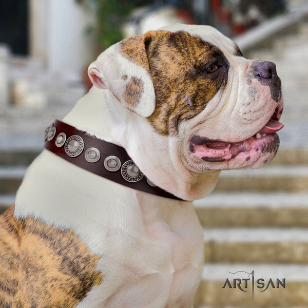 American Bulldog unusual leather dog collar with adornments for easy wearing